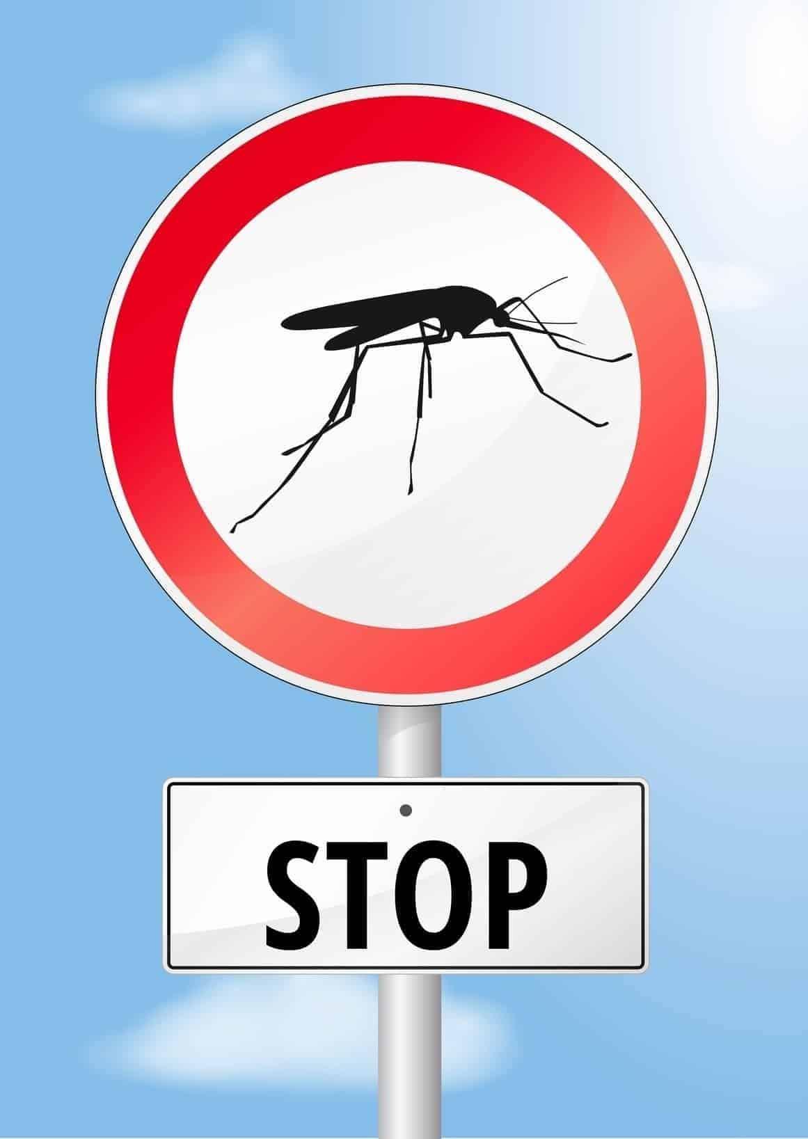 lutte contre le moustique