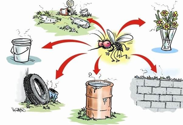 évolution moustique