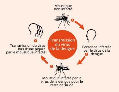 transmission dengue
