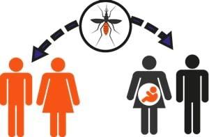 transmission zika