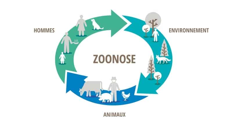 maladie zoonose moustique
