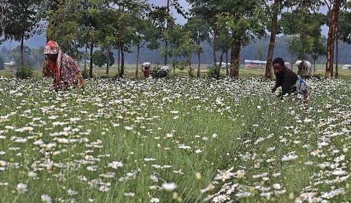 insecticide naturel