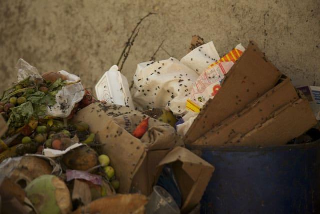 mouches poubelles