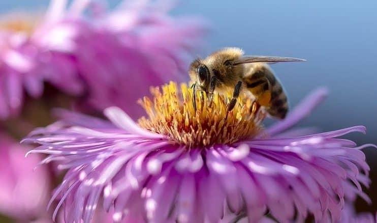 préserver les abeilles