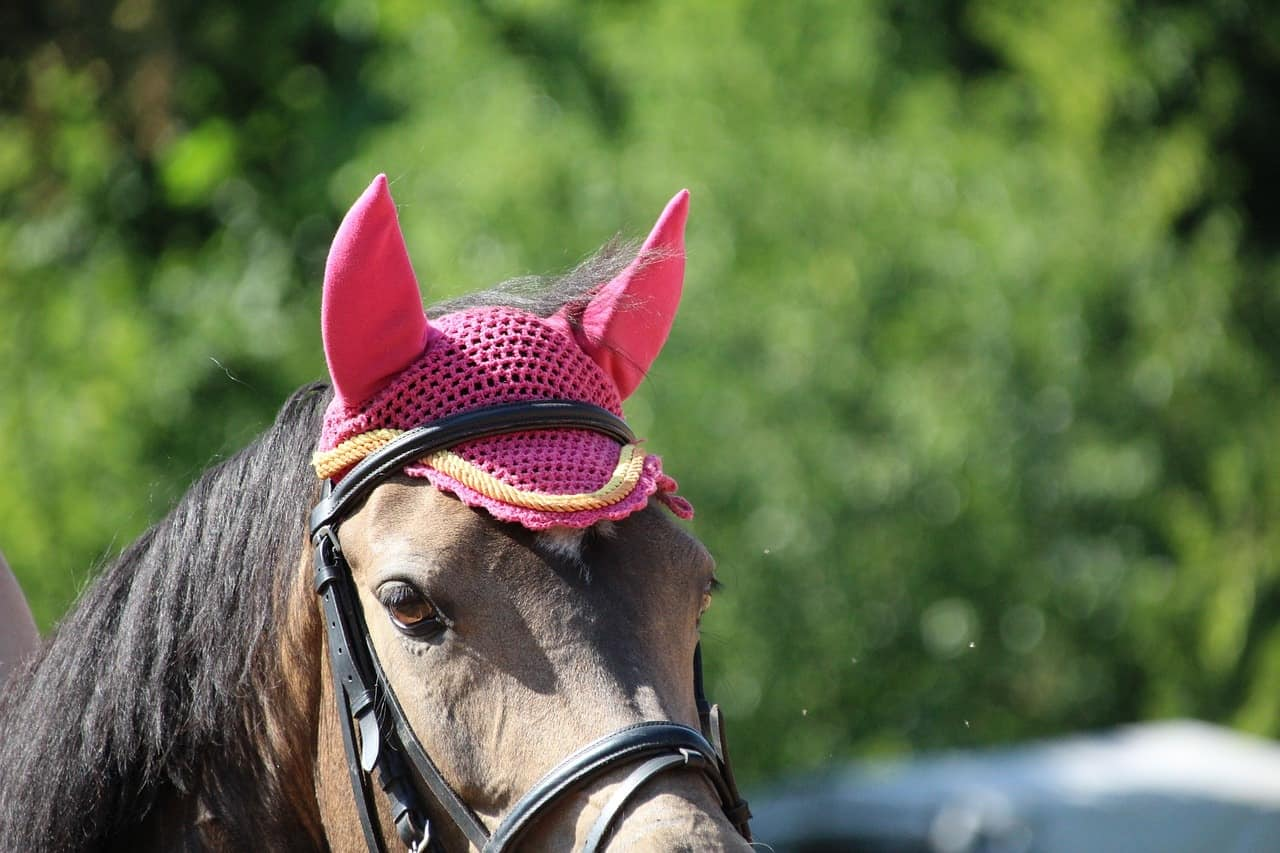 bonnet anti moustique cheval
