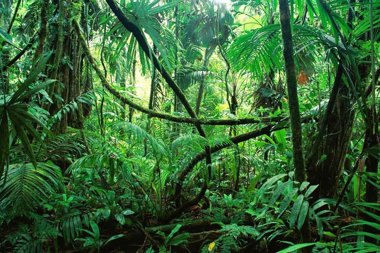 anti moustique zone tropicale