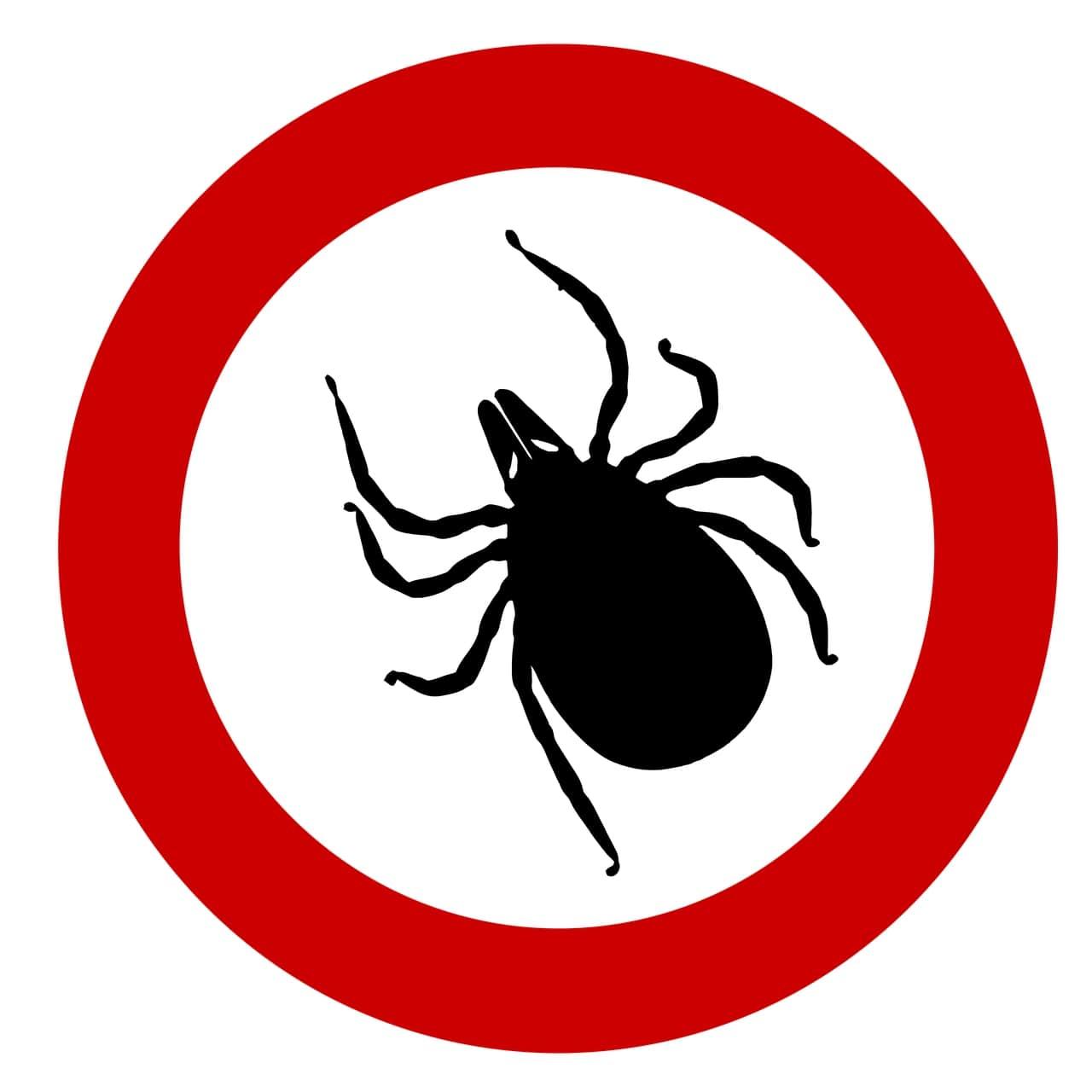 insectes dangereux