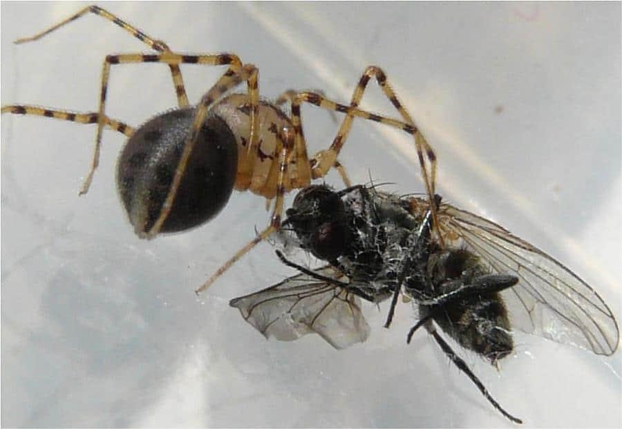 araignée biodiversité