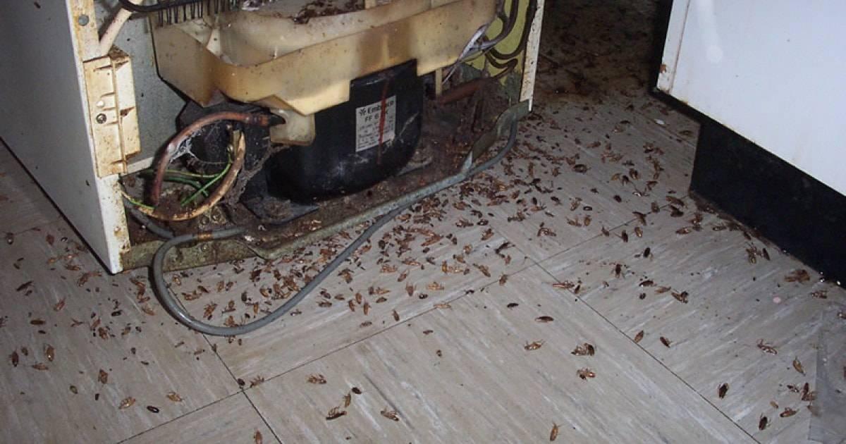 astuce anti blattes