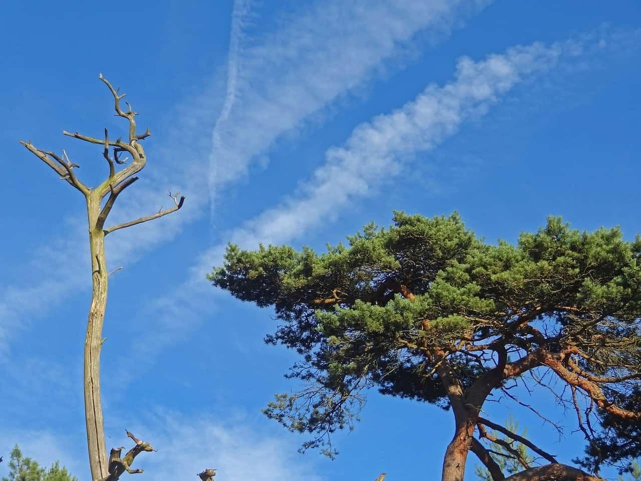 dégâts chenille arbre
