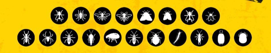 Liste d'icônes d'insectes